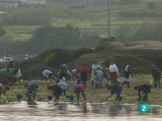 MARISCOS DE LA RIA DE AROSA (documental tve)
