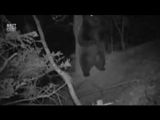 ночная жизнь леса