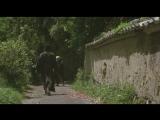 Сумрачный самурай  Tasogare Seibei  The Twilight Samurai (2002)