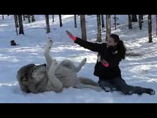 GIANT Wolf Plops Down Beside Her, But Watch What Happens Whe