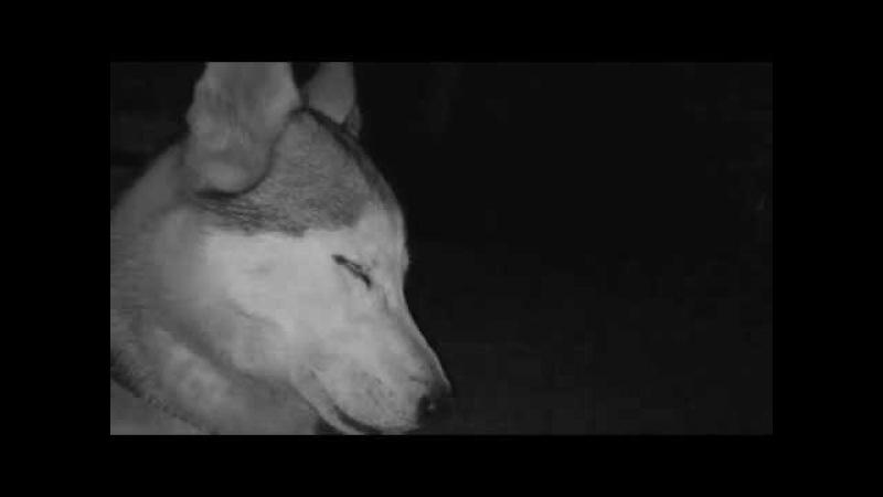 MATRANG - КИНО (OFFICAL MUSIC VIDEO)