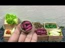 Batata miniatura . Boniato miniatura . Camote miniatura .miniature sweet potato