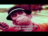 Kid Koala feat. Gorillaz - Routine Subtitulado en Espa
