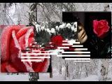 Анжелика Агурбаш  - Роза на снегу.....