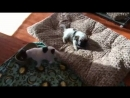 Самый счастливый собакен на свете