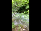 Горная река Грузии