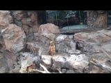 Мишки бурые , Okean kingdom