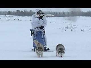 Мотострелки провели учения на собачьих и оленьих упряжках