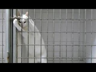 Сотрудники ветклиники установили камеру в клетке этой кошки. Только посмотри, ч ...