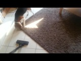 How to clean house with funny dog