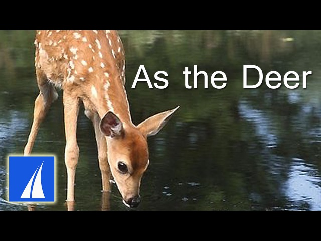 As the Deer (with lyrics) - best heartwarming version