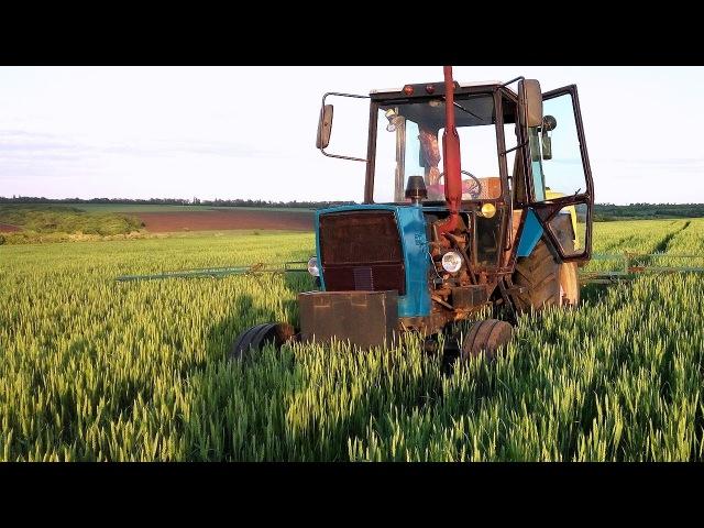 Выращивание пшеницы, наши Эксперименты. СельхозТехника ТВ