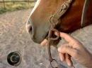 Qual a melhor forma de colocar o freio no cavalo?
