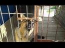 Собака открывает замок в вольере носом смотреть всем ржака до слёз
