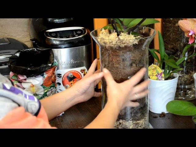 Самый лучший способ посадки орхидей Фаленопсис Часть 1 Закрытая система