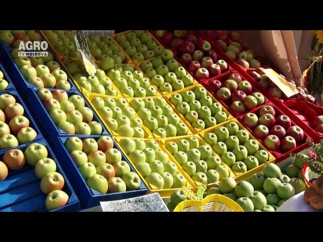 Festivalul Mărului, sărbătorit cu fast la Soroca