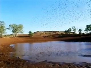 Наедине с природой (2004) попугайчики