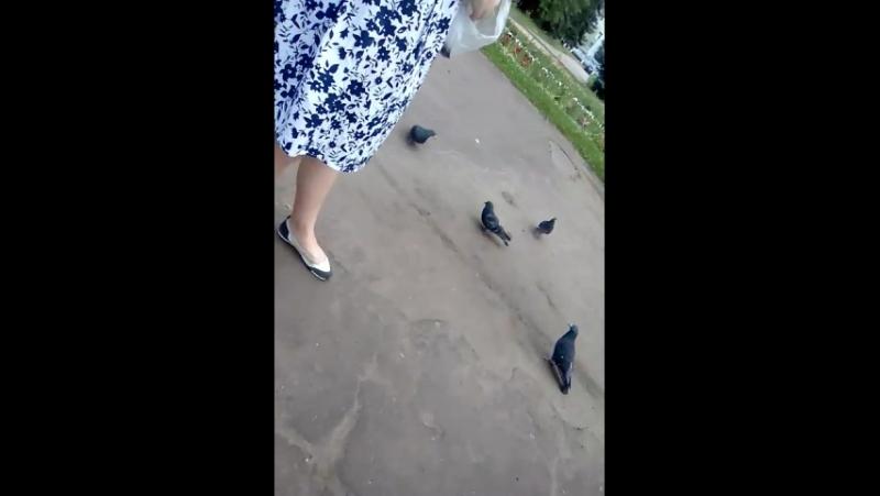 Прогулка с Анной и милые голуби)