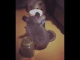 Про котика и мышку