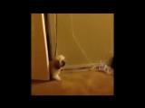 Как_напугать_своего_другаvideosos___Видео304