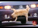 Top 10 Just for Laughs Gags Roadkill Cat