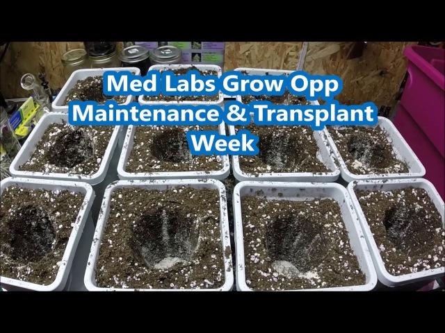 Med Labs Grow Opp Maintenance Transplant Week