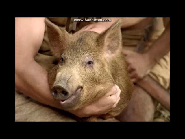 Почему мусульмане не едят свинину. Свинья это человек