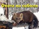 Охота на соболя на Алдане Охота в Якутии