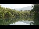 Amami Mangrove Forest 4K (Ultra HD) - マングローブ原生林/奄美大島
