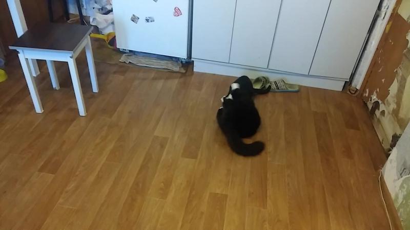 борцуха у котов