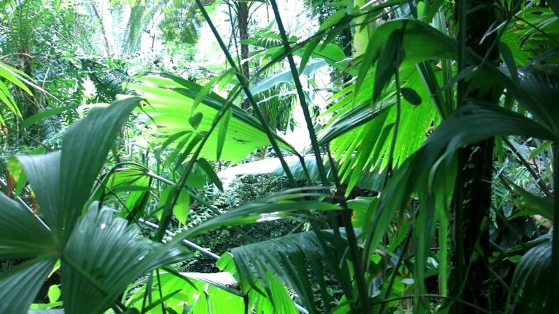Косплею Хищника :) @ De Hortus Botanicus Amsterdam