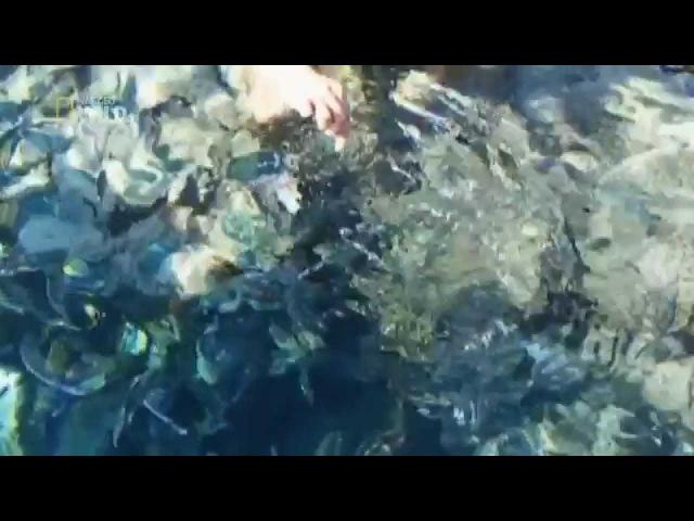 Акулы в Шарм Эль Шейхе - Нападение акул в Шарм Эль Шейхе