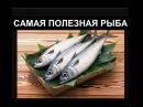 Самая полезная рыба по мнению ученых