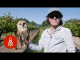Barn Owls The Secret Saviors of Napa Valley's Vineyards