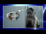 КВН Сборная Большого Московского Государственного Цирка - 2016 Высшая лига Вторая 1/2 Видеоблог