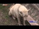 Житель Ингушетии поймал волка голыми руками, защищая своих детей