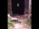 Позор Дагестана!! СПАЛИЛИ ДЕВУШКУ С .....!! Шокированное видео!!!
