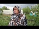 Прополка Моркови Керосином. Керосин от Сорняков и Вредителей. (03.06.17).mp4