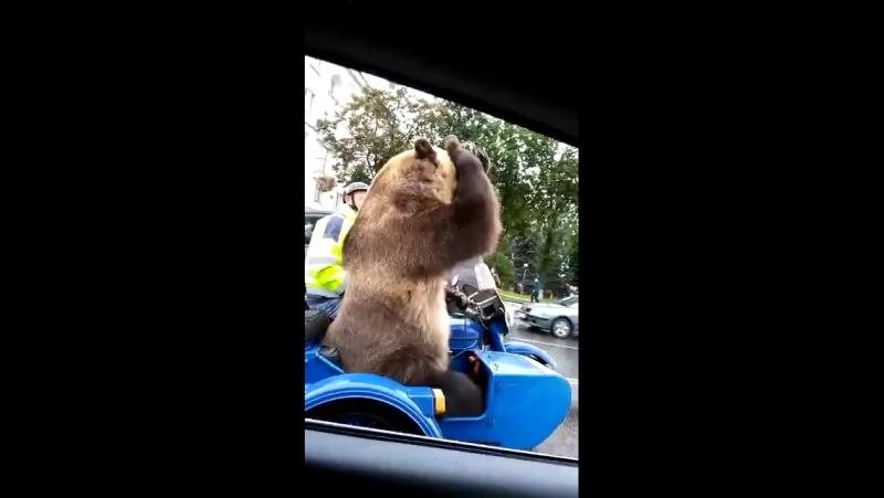 Медведь показал...