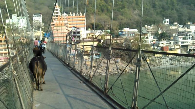 Ришикеш.нависной мост через Ганг(зима15)