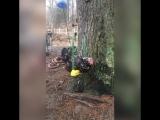 Вы когда-нибудь видели курицу на качелях? Теперь у тебя есть! 😉