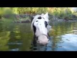 Лошадка забавно пускает воздушные пузыри под водой