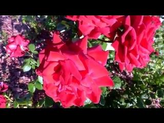Дарите женщинам цветы!Прекрасные цветы только для Вас!!!
