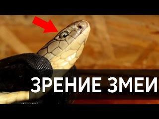 ЗРЕНИЕ ЗМЕИ / Как змея видит? / Последнее видео Арслана Валеева