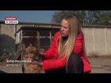 Як тварини із каліцтвами знаходять новий дім у Черкасах. Відео 24 каналу.