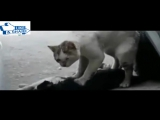 Emotional and Amazing Animals Rescuing Other Animals HD