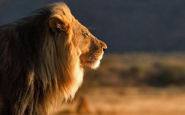 Страх — это возможность для смелости, а не доказательство трусости.Д