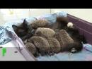 Кошка стала мамой для осиротевших ежат-tWGKUJFEN04