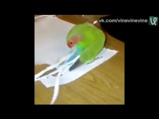 Попугаю не нравится его короткий хвост