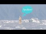 SVALBARD VLOG//Как я встретила медведя// Спуск в тоннель в леднике